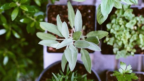 planter box workshop