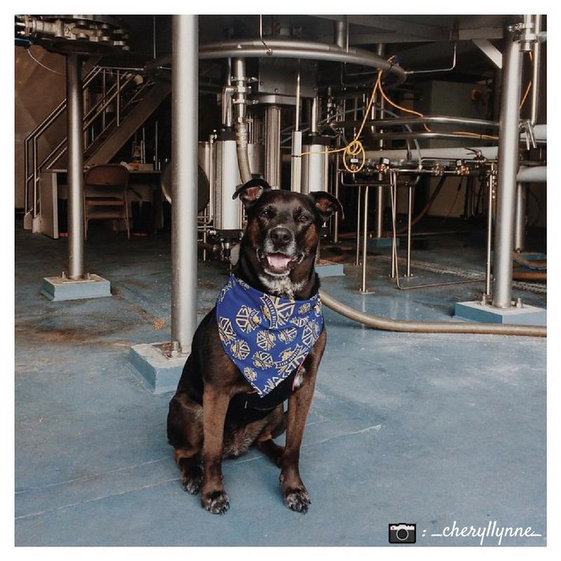 Pup at Diamond Bear Brewery