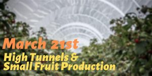 tunnels and fruit productions