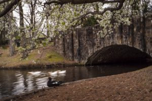 spring on the lake with tunnel